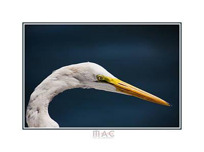 Photograph - 9226b by Carlos Mac