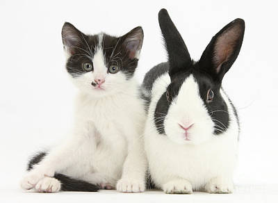 House Pet Photograph - Kitten And Rabbit by Mark Taylor