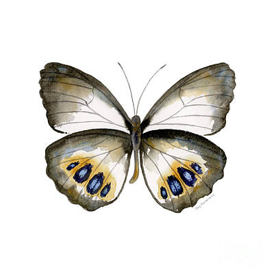 On-white Painting - 95 Palmfly Butterfly by Amy Kirkpatrick