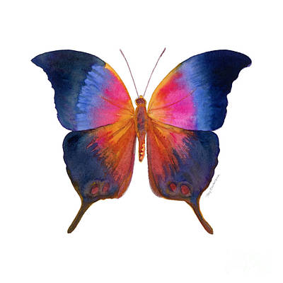 Animals Paintings - 96 Brushfoot Butterfly by Amy Kirkpatrick