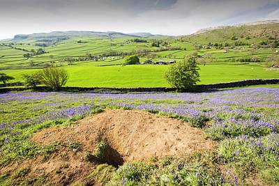 Blue Flowers Photograph - A Badger Sett Amongst Bluebells by Ashley Cooper
