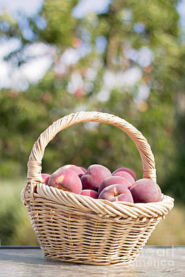 Photograph - A Basket Of Freshness by Linda Lees