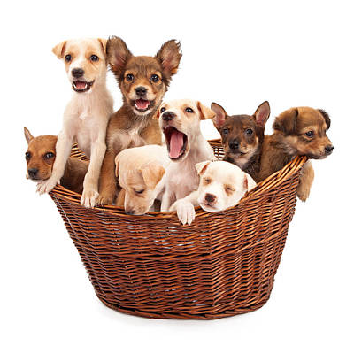 A Basket Of Puppies  Art Print by Susan Schmitz