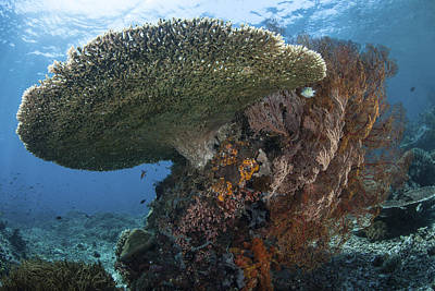 Western Art - A Beautiful Coral Reef Thrives by Ethan Daniels