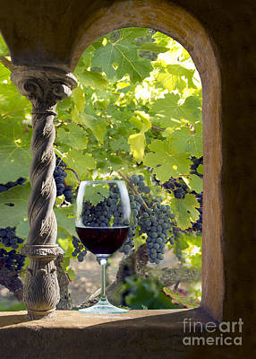 Cellar Photograph - A Beautiful Day At The Vineyard by Jon Neidert