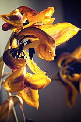 Photograph - A Beautiful Death by Mirian Hubbard
