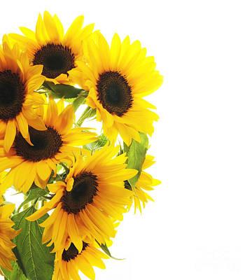 A Beautiful Sunflower Art Print by Boon Mee