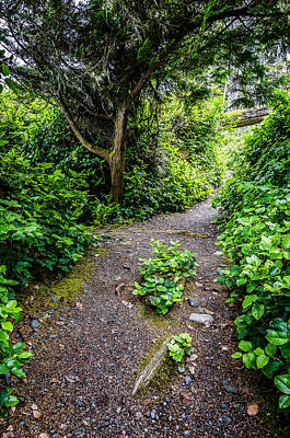 Photograph - A Beautiful Trail by Roxy Hurtubise