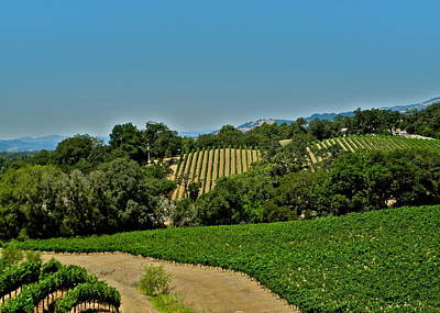 Photograph - A Beautiful Vineyard In Sonoma by Kirsten Giving