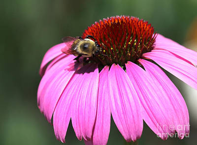 Photograph - A Bee On The Highline by Steven Spak