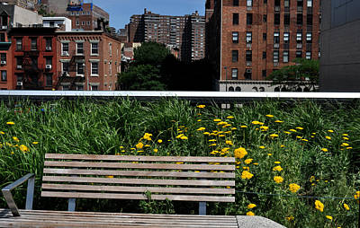 A Bench On The High Line In New York City Art Print by Diane Lent