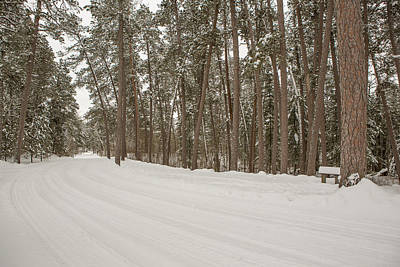 Itasca State Park Photograph - A Bend In The Road by Tim Grams