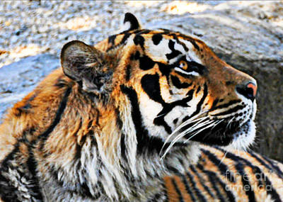 Photograph - A Bengal Tiger Profile  by Mindy Bench