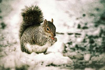 Nikki Vig Royalty-Free and Rights-Managed Images - A Berry Good Find - Squirrel by Nikki Vig