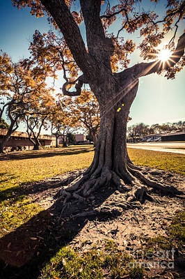 Photograph - A Big  Tree Trunk Of Long Beach In The Autumn by Sviatlana Kandybovich