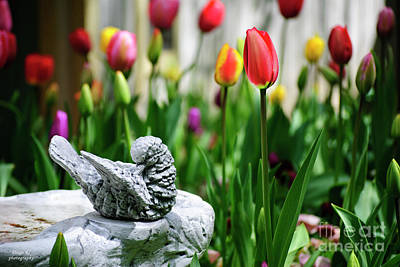 Tulip Mania Photograph - A Bird And A Tulip by Diego Re