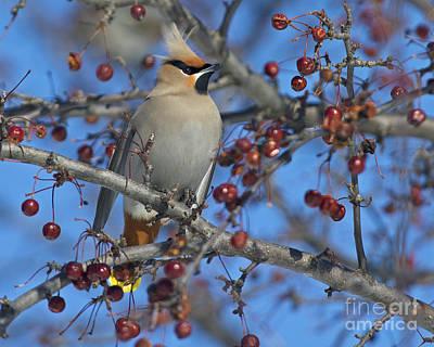 A Bird For Its Crest.. Art Print by Nina Stavlund