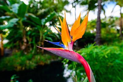 Photograph - A Bird From Paradise by Jason Chu