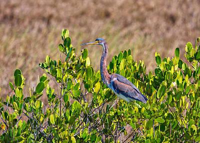 Wildlife Photograph - A Bird In A Bush by John M Bailey