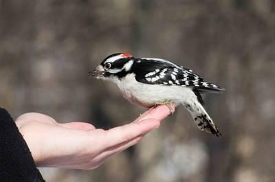 A Bird In The Hand Art Print by Cheryl Cencich