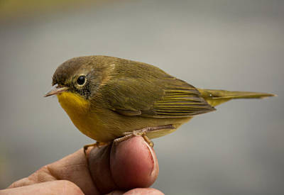Photograph - A Bird In The Hand by Paul Miller