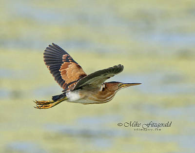 Photograph - A Bit Of Flight by Mike Fitzgerald