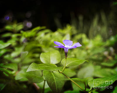 Art Print featuring the photograph A Bit Of Purple by Maria Janicki