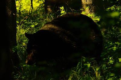 A Black Bear Art Print
