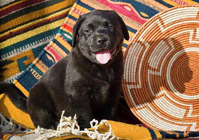 Black Lab Photograph - A Black Labrador Retriever Puppy by Zandria Muench Beraldo