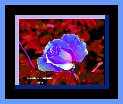 Digital Art - A Blue Rose For One by Joseph Coulombe