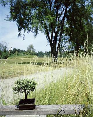 Park Benches Photograph - A Bonsai Tree In A Hayfield by Pedro E. Guerrero