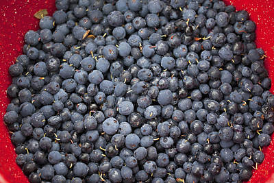Glenda Photograph - A Bowl Of Blueberriesalaska United by Glenda Christina