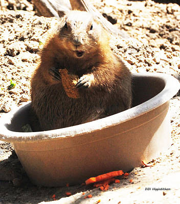 Photograph - A Bowl Of Groundhog And Veggies by DiDi Higginbotham