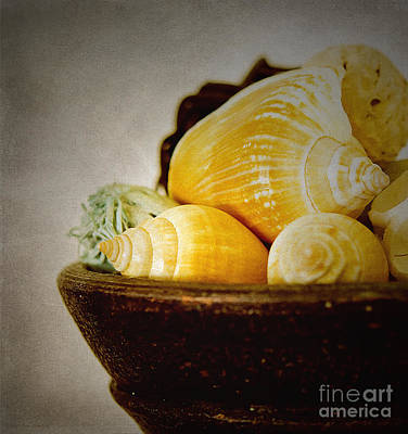 Photograph - A Bowl Of Shells by MaryJane Armstrong