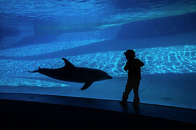 Photograph - A Boy Connects With A Dolphin by Jennifor Idol