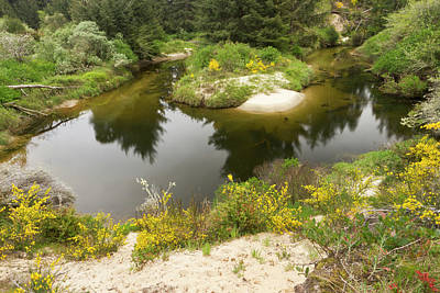 Sutton Photograph - A Brackish Creek Runs by William Sutton