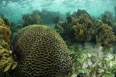 A Brain Coral Is Seen As Part Art Print
