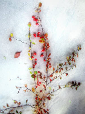 Photograph - A Branch Of Colorful Barberries by Louise Kumpf