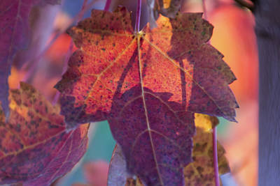 Photograph - A Breath Of Autumn by Dana Moyer