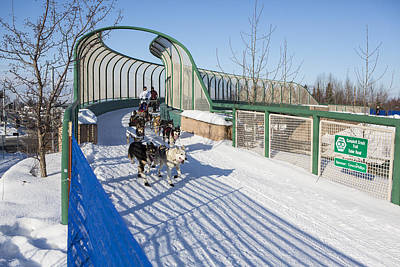 A Bridge In The Iditarod  Art Print by Tim Grams
