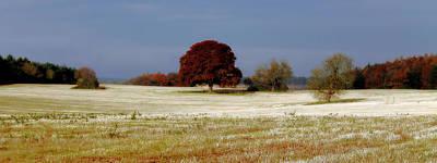 Photograph - A British Autumn by Sarah Broadmeadow-Thomas