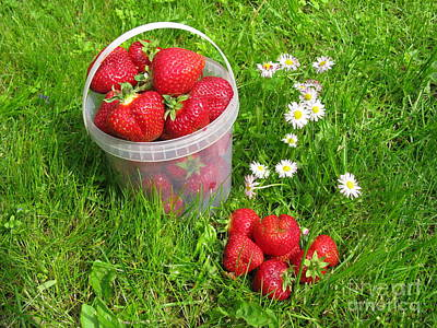 Photograph - A Bucket Of Strawberries by Ausra Huntington nee Paulauskaite
