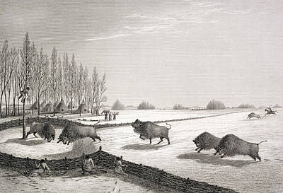 Hunters Drawing - A Buffalo Pound by George Back