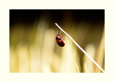 A Bug On A Wheat Straw Original