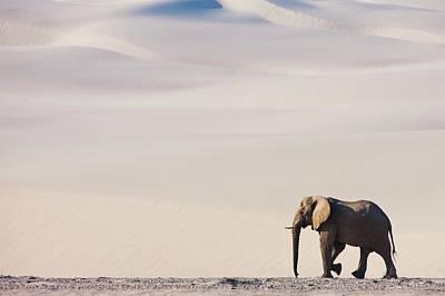 Photograph - A Bull Elephant Roams Through The Desert by Jami Tarris