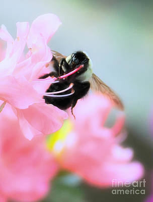 Photograph - Bumble Bee And Azalea by David Perry Lawrence