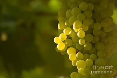 A Bunch Of Green Grapes Art Print by Leyla Ismet