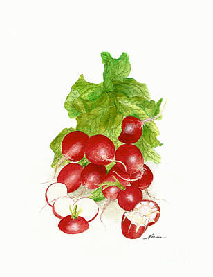 Painting - A Bunch Of Red Radishes Illustration by  Nan Wright