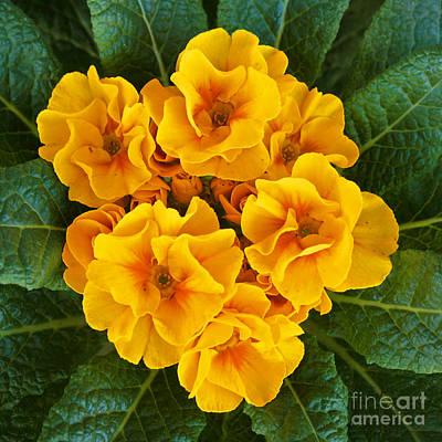 A Bunch Of Yellow Flowers Art Print by Kenny Bosak