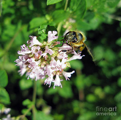 Photograph - A Busy Bee With Big Eyes by Ausra Huntington nee Paulauskaite